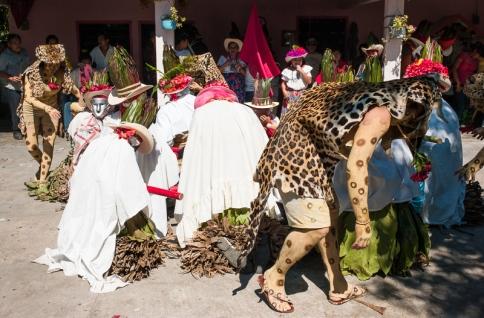 Los tigres atrapan a los cojoes en un momento de la danza. ©2010 Francisco Cubas